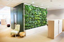 Växtvägg till kontoret